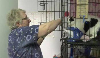 Winnipeg overrun with an estimated 100,000 feral cats, says shelter - Winnipeg