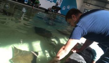A curious visitor touching a stingray at Assiniboine Park Zoo.