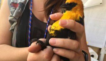 A bird gets examined at Oak Hammock Interpretive Centre