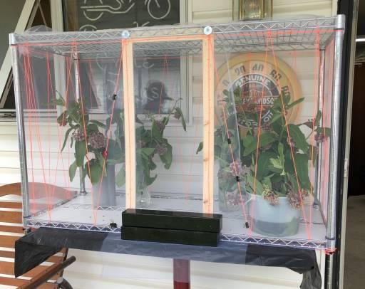Yvonne Sharples' indoor butterfly setup.