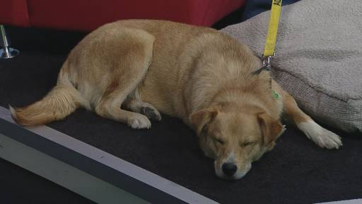 Tess spent sometime resting while be featured on Global News Morning's weekly segment Adopt A Pal.