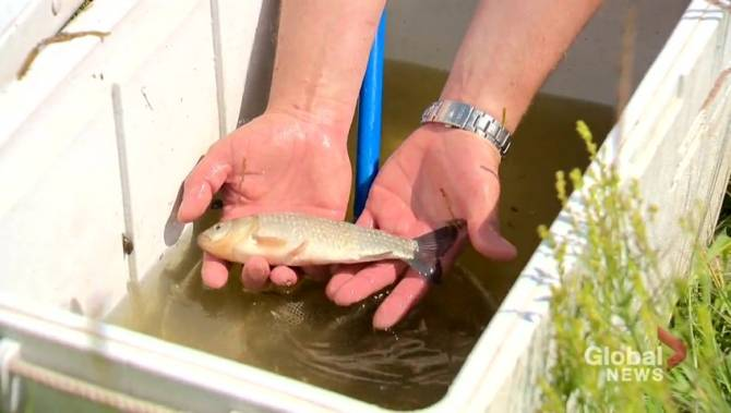 Feds earmark up to $2.9M to protect at-risk aquatic species in southern Prairies
