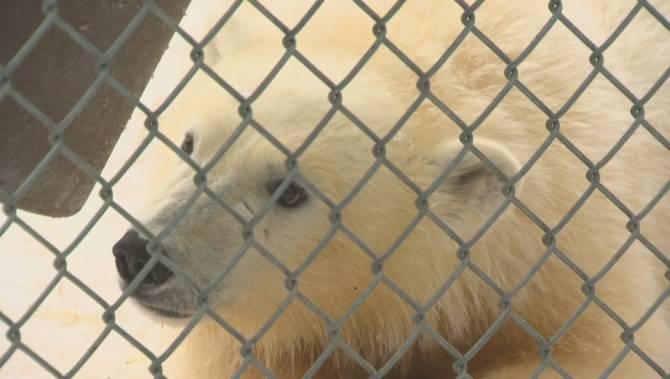 Winnipeg zoo focuses research on arctic ice, climate change in Manitoba - Winnipeg