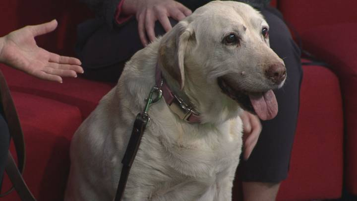 Tia joins Global News Morning for the latest edition of Adopt A Pal.