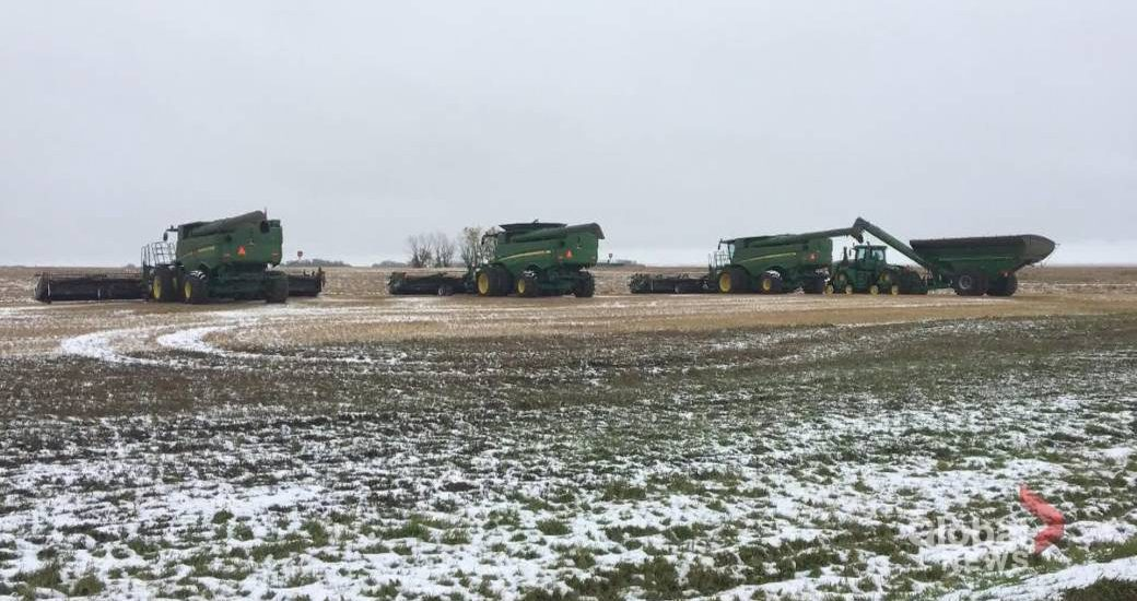 Farmers in Alberta, Saskatchewan struggling to harvest snow-covered crops, while Manitoba saw 'miracle' snow melt