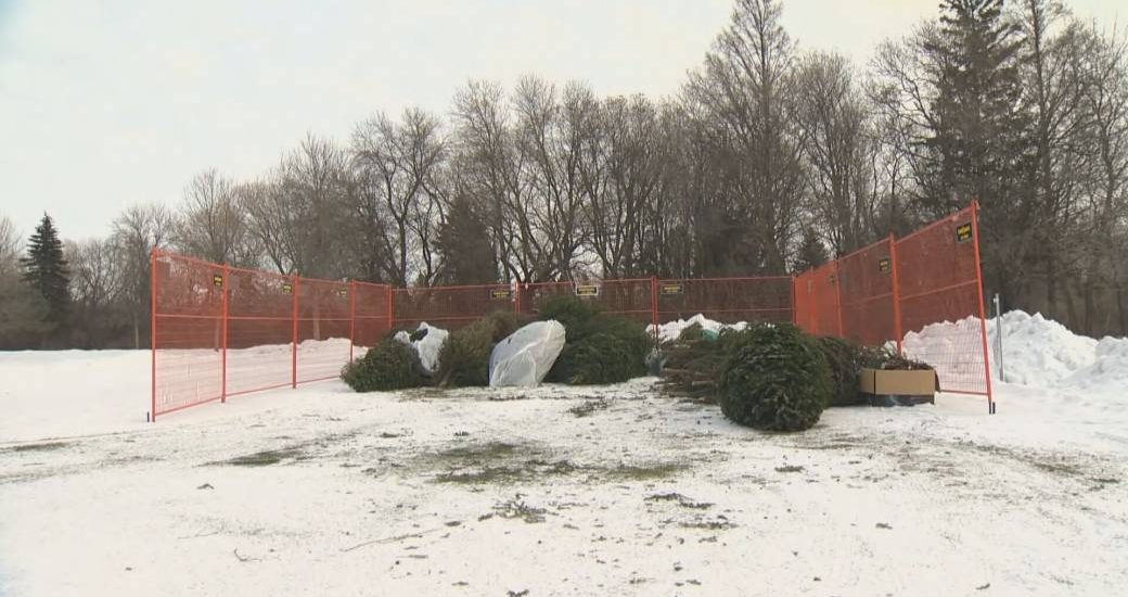 Winnipeg asking residents to 'chip in' by recycling Christmas trees - Winnipeg